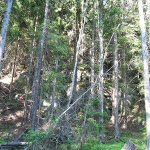 Каменные обрывы среди деревьев