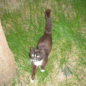 Местный кот весьма компанейский, все время ходил за нами следом