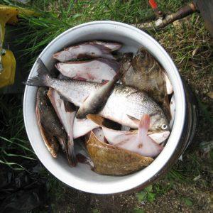 Наловленная рыба, которую для нас приготовят