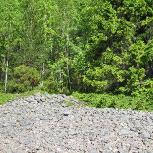 Стелющиеся по камням ветви ели