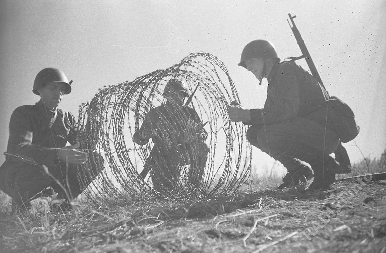 Бойцы-связисты устанавливают проволочные заграждения. Дон, 1942 г.