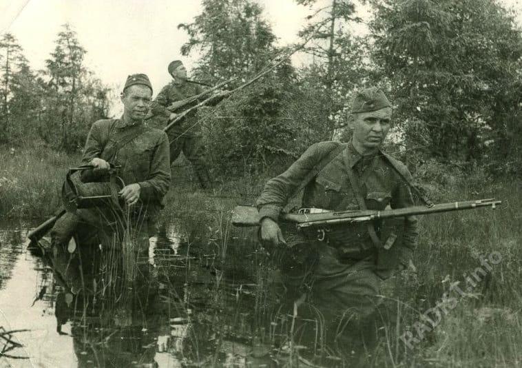 Связисты Волховского фронта Патман, Михнев и Вошкин прокладывают кабель через болото, 1942 г.